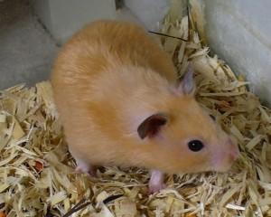 Hamstervoer kopen