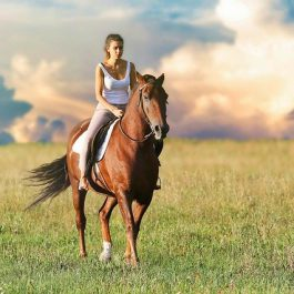 Welke attributen zijn onmisbaar als je gaat paardrijden
