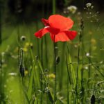 Van plan om je tuin te beregenen? Let hier op
