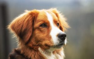Artrose hond