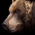 Tips voor het zoeken naar mooie opgezette dieren